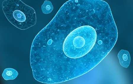 Амебы в желчном пузыре