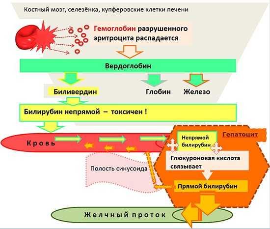 Язва желудка лечение препаратами схема