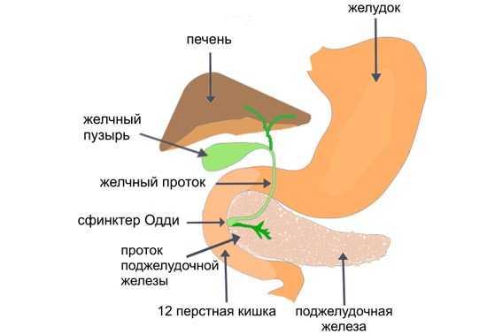 Билиарная система