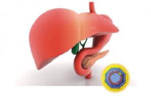 Сан пин профилактика гепатит с